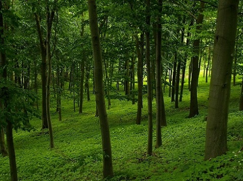 Pennsylvania green forest with trees in the summer
