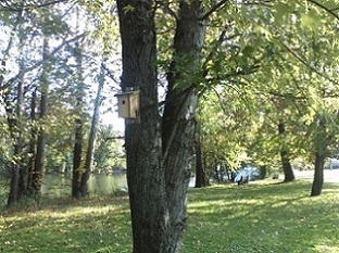 birdhouse on a tree by a sun filled lake in Pennsylvania