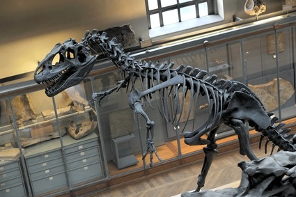 natural science museum dinosaur