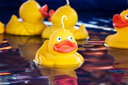 yellow ducks in the water before the race at the festival in Pennsylvania