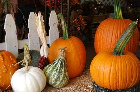 pumpkins, dried corn, small white fense and other crafts