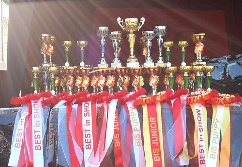 awards at dog show