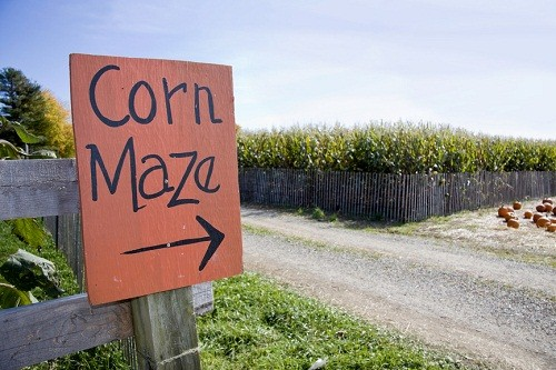 sign to the corn maze at the festival