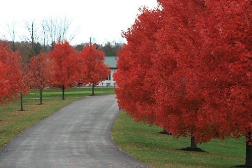 Pennsylvania golf course road entrance in the autumn with trees with red leaves