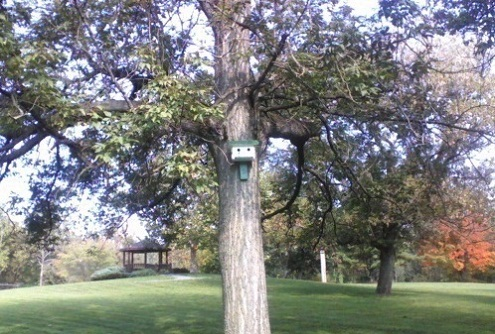birdhouse on a tree with a gazebo behind