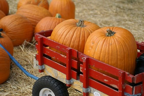 two pumpkins in a red wagon with more beside
