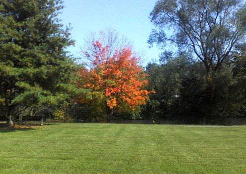 PA park wth green grass, an orange leave tree in the fall