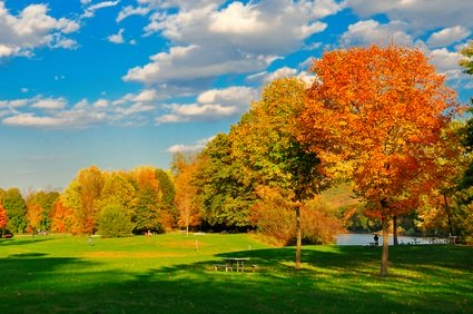 fall colored tree leaves of orange, yellow and green on green grass with blue sky and white clouds in Ligonier PA by water