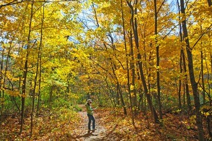 trail in fall
