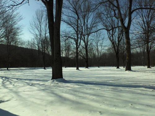 freshly fallen snow in the Poconos region of Pennsylvania