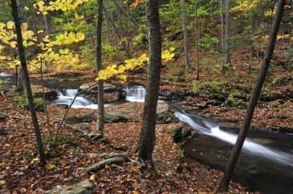 Poconos mountains Loyalsock State Forest Dushore PA, Sullivan County PA creek