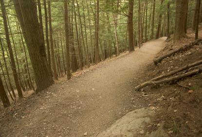 path in the Tioga State Forest in Wellsboro PA, Tioga County PA
