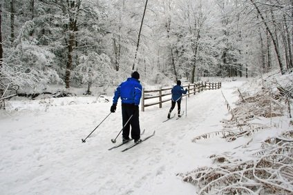 cross country skiing in a PA state park in the winter with snow on the ground and covering the tree branches