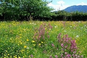 Pennsylvania wildflower preserve with yellow and purple plants on green grass with mountain backdrop