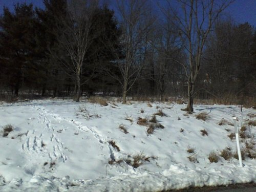 Pennsylvania mountains in January with snow on the ground surrounded by trees
